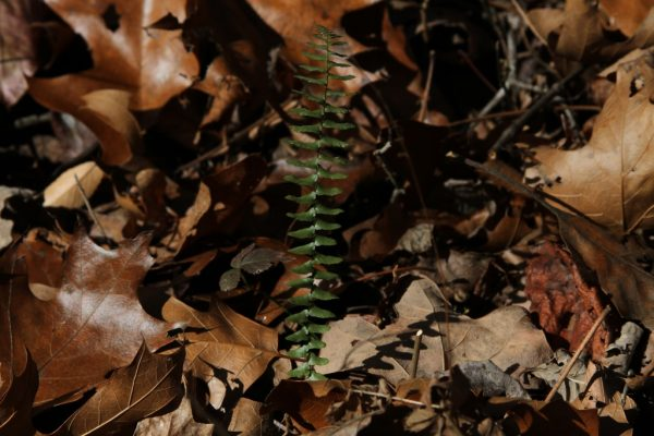 green fern frond