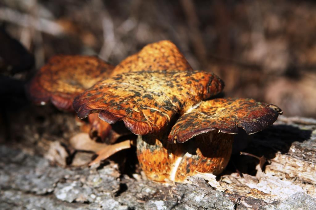 fungi in the wilds at Wild Ozark