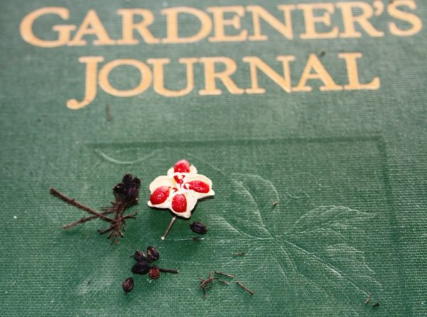 seeds from strawberry wahoo and devil's walking stick