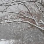 snow in oak