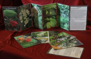 These are the Wild Ozark Herbs Plant Identification Cards