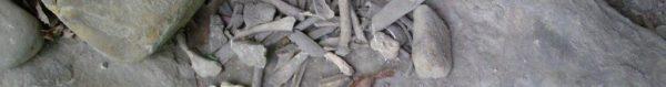 bones from a cave in northwest arkansas