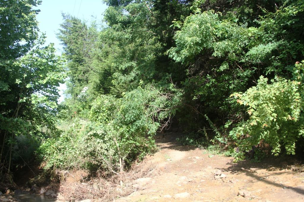 Slow Landslide at Wild Ozark