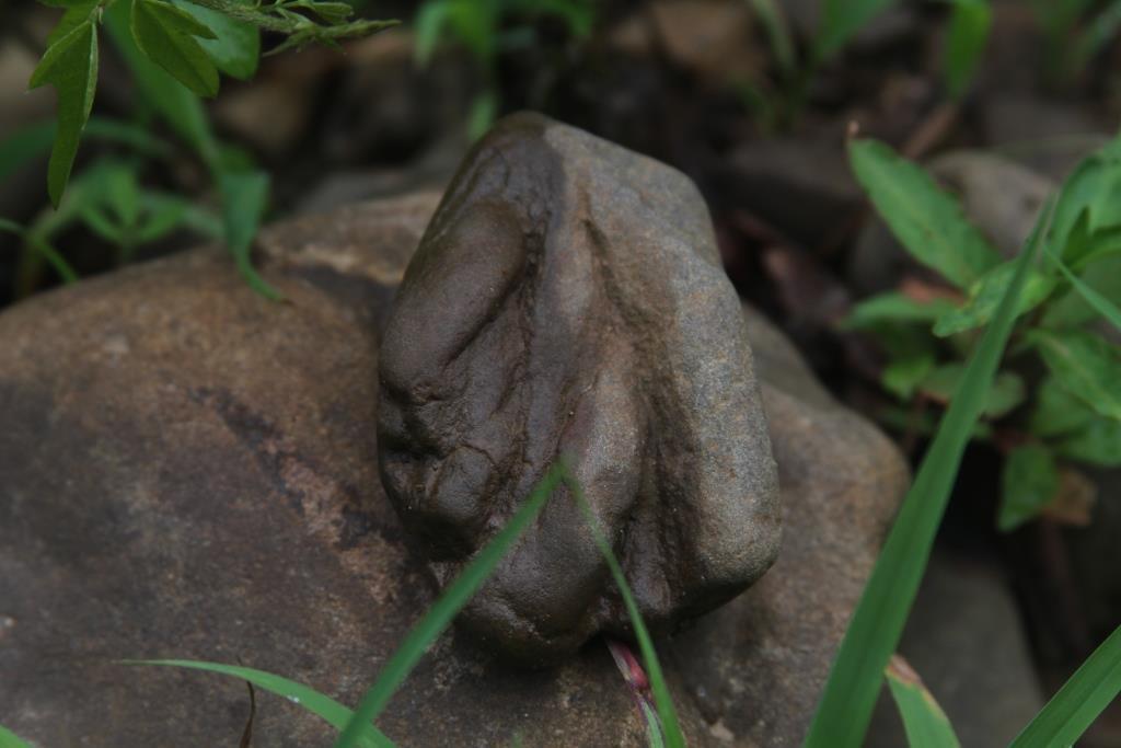Bear Claw rock