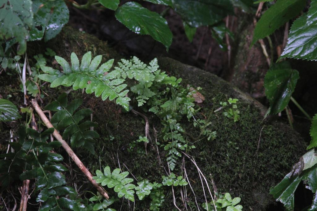 ferns and moss on rock