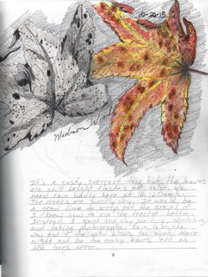 join us for a nature writing workshop at Hobbs State Park with Madison Woods
