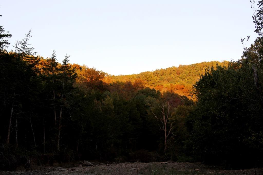 The setting sun illuminated these trees on the hillsides, really showing up the beginning color.