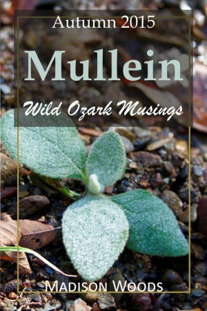 The cover for the Autumn 2015 issue of Wild Ozark Musings where mullein is featured.
