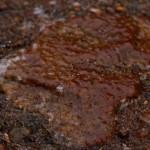 Ice glazed rock.