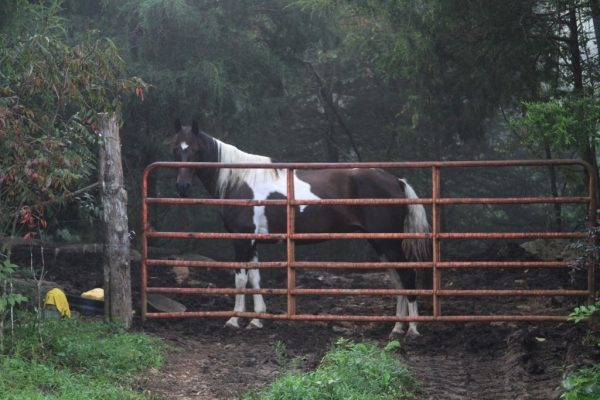 "Shasta, keeping Comanche away from the gate so she can have first divs. Or is it ""dibs""?"