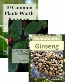 Information about Ginseng