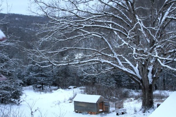 Trees for the Forest. Hen House in the Snow