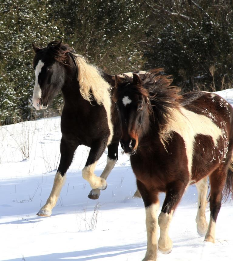 Comanche in the back, Shasta in front. Kicking up heels in delight. And because Bobbie Sue was harassing them.