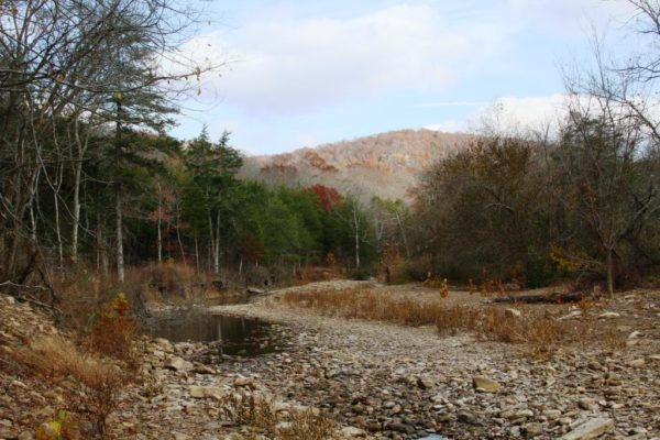 Felkins Creek showing the last of the fall color