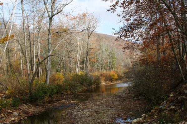 Another view of Felkins Creek.