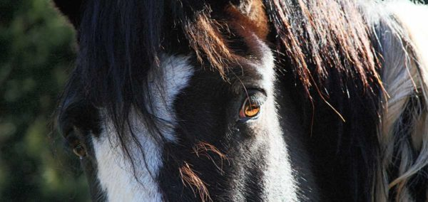 Comanche's Lovely Eyes