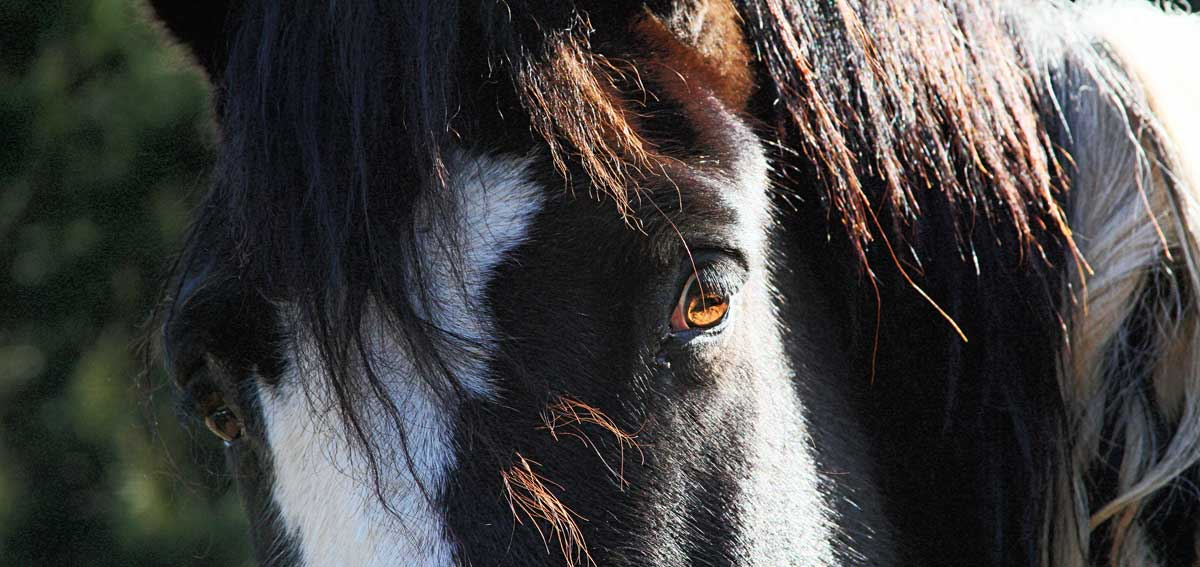 Comanche's Lovely Eyes are on products at RedBubble.