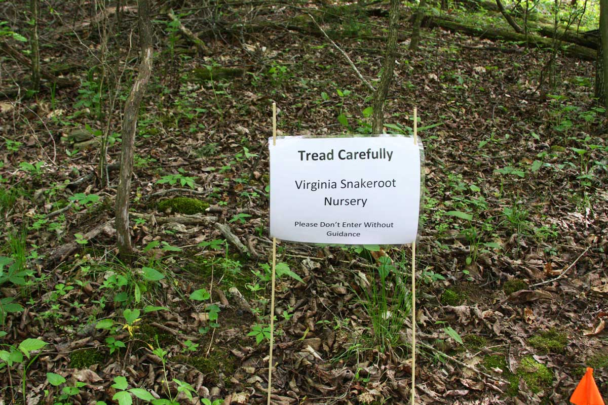 A sign I put up to protect the Virginia snakeroot plants.