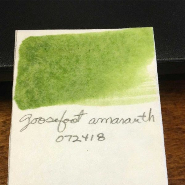 Green handmade watercolor paint from lamb's quarters leaves.
