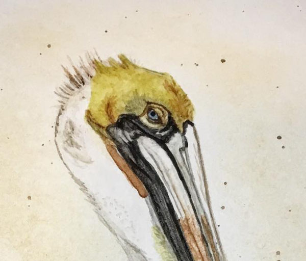 Totally reworked the pelican's eye and face. Much better now.