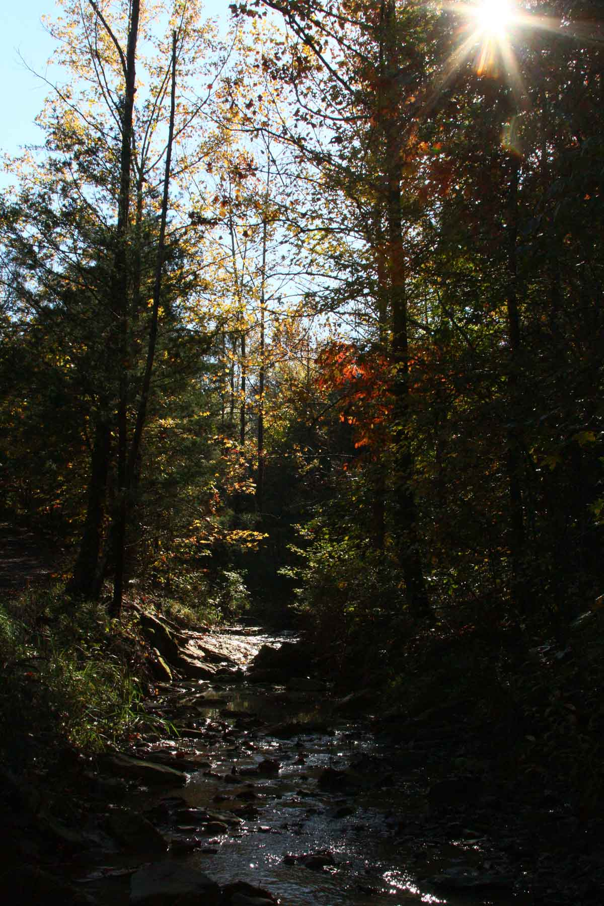 The creek that runs alongside our driveway. Locally, it's known as 'the branch', but I call it the Wild Ozark creek.