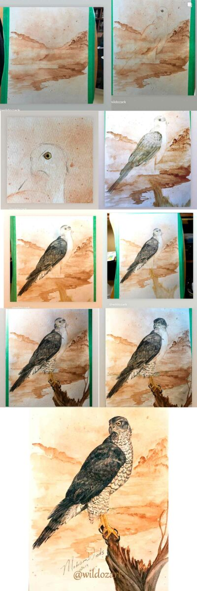 The progression of Goshawk No. 1 from start to finish.