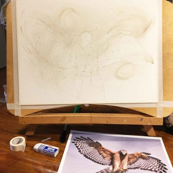 Background and rough sketch for the first red-shouldered hawk painting.