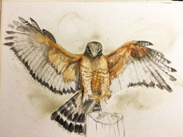 Progress on Red-Shouldered Hawk by the end of the day