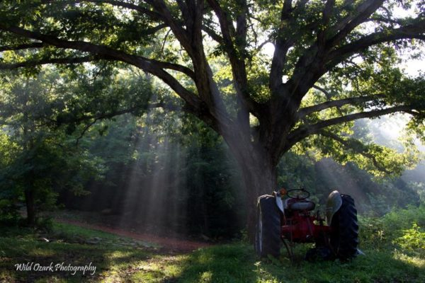 8N Ford Tractor under the sunbeams.