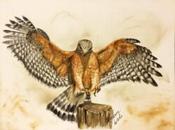 Red-shouldered hawk in handmade watercolors using Ozark pigments. You could decorate with nature, literally.