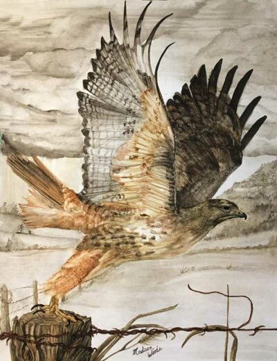 """Accepted to the Wild & Scenic Film festival. """"Destination Unknown"""", in Ozark earth pigments. The model was a photo by Mike TR Dunn, used by permission. Media is handmade watercolors using real earth pigments on Fabriano 300# and is 16"""" x 20"""". The Red-tailed hawk is one of the birds in my ongoing Ozark Birds of Prey project."""