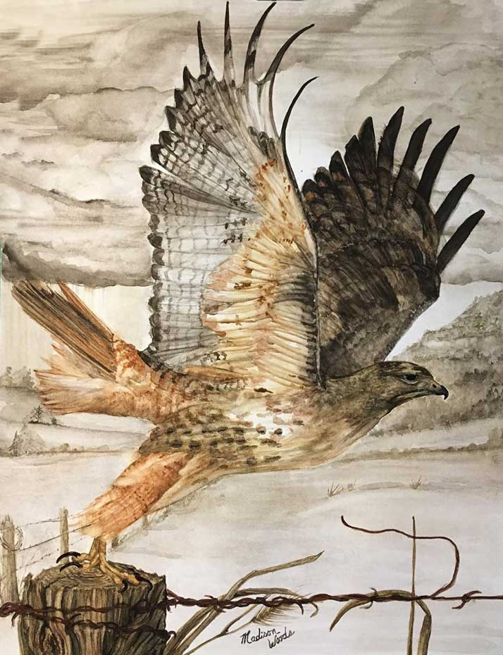"Accepted to the Wild & Scenic Film festival. ""Destination Unknown"", in Ozark earth pigments. The model was a photo by Mike TR Dunn, used by permission. Media is handmade watercolors using real earth pigments on Fabriano 300# and is 16"" x 20"". The Red-tailed hawk is one of the birds in my ongoing Ozark Birds of Prey project."
