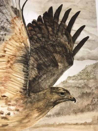Head and wing closeup of red-tailed hawk painting.