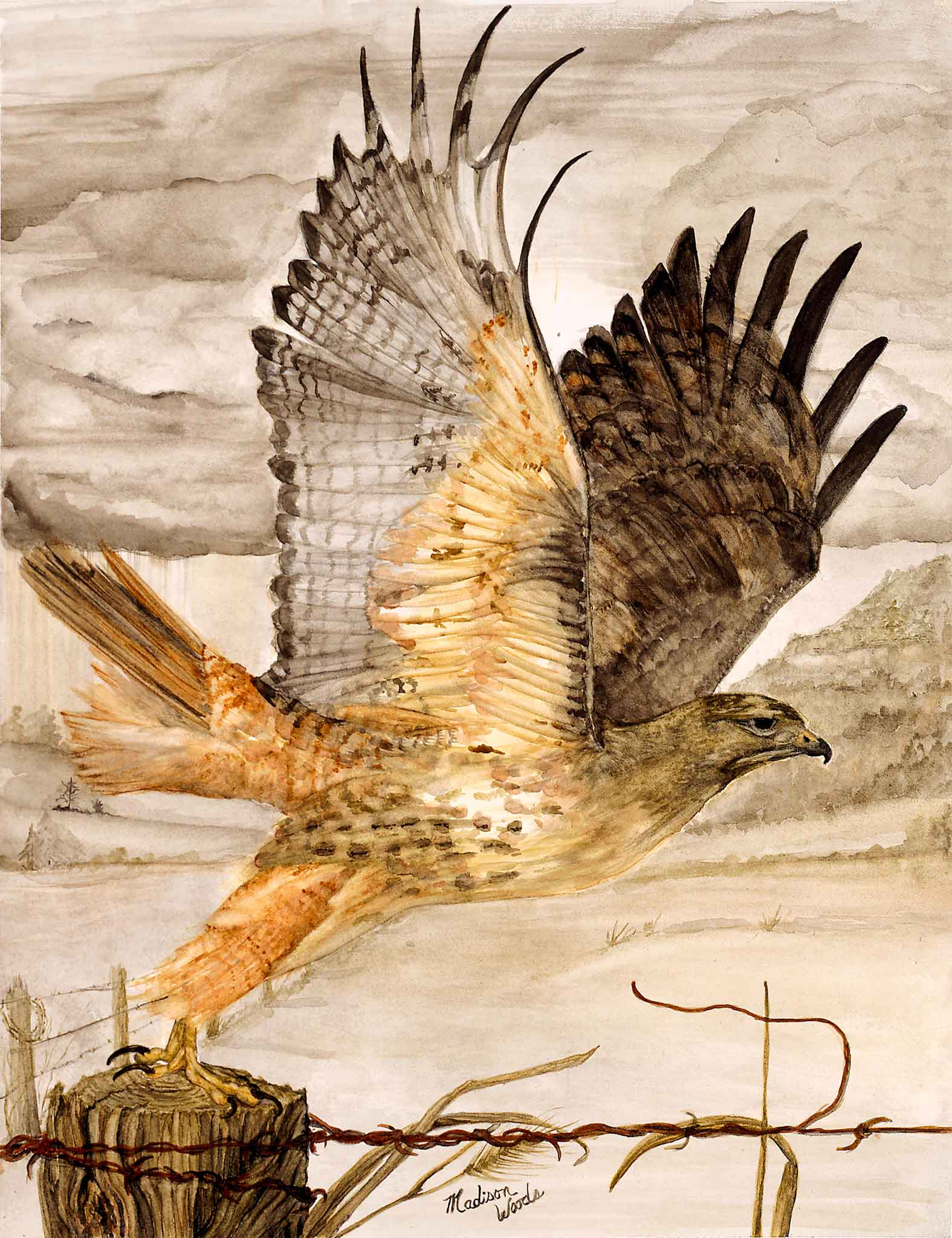 An 11 x 14 mounted red-tailed hawk print from Wild Ozark is ready to hang, UV resistant, and requires no frame or glazing.