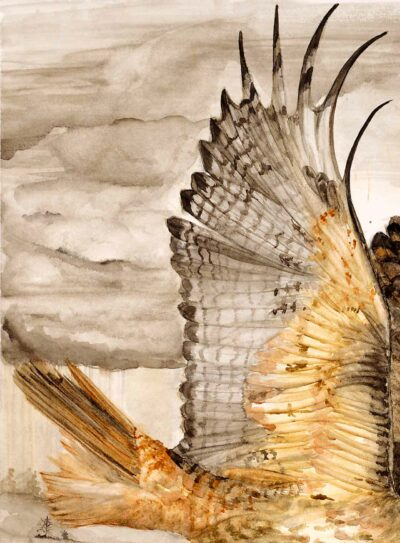 Wing and tail closeup on red-tailed hawk painting