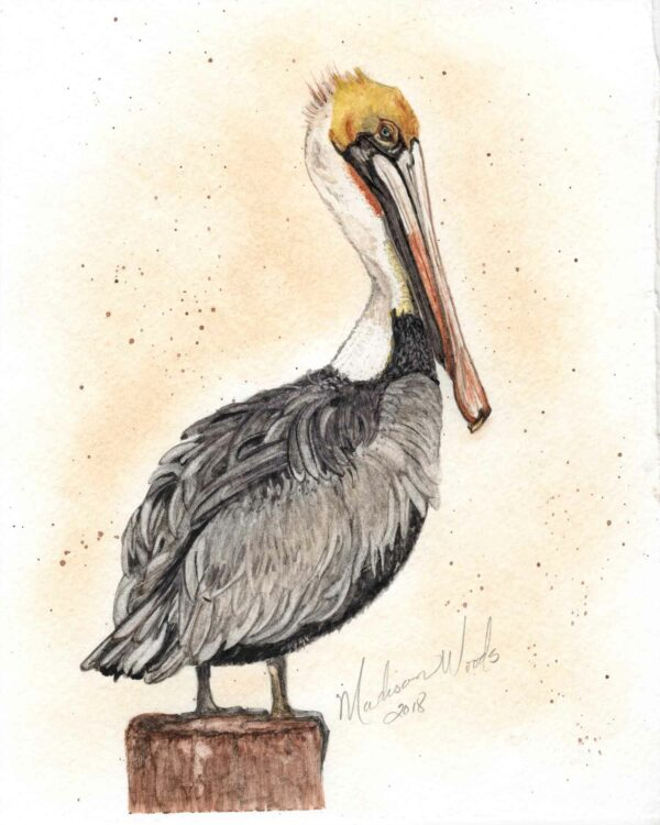 My painting of a brown pelican using Ozark pigments.