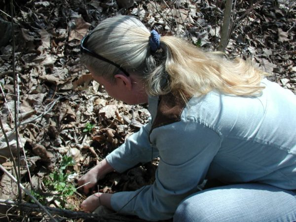 Me, unearthing a bloodroot to show someone how it looks inside.