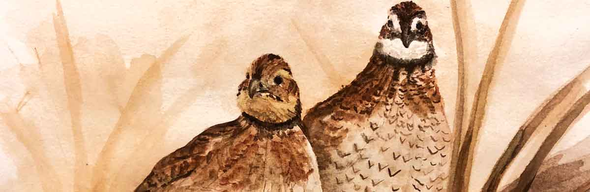 Finished with my sweet pair of Bobwhite quail!