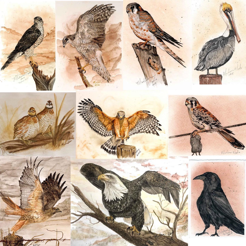 Bird paintings so far by Madison Woods of Wild Ozark.