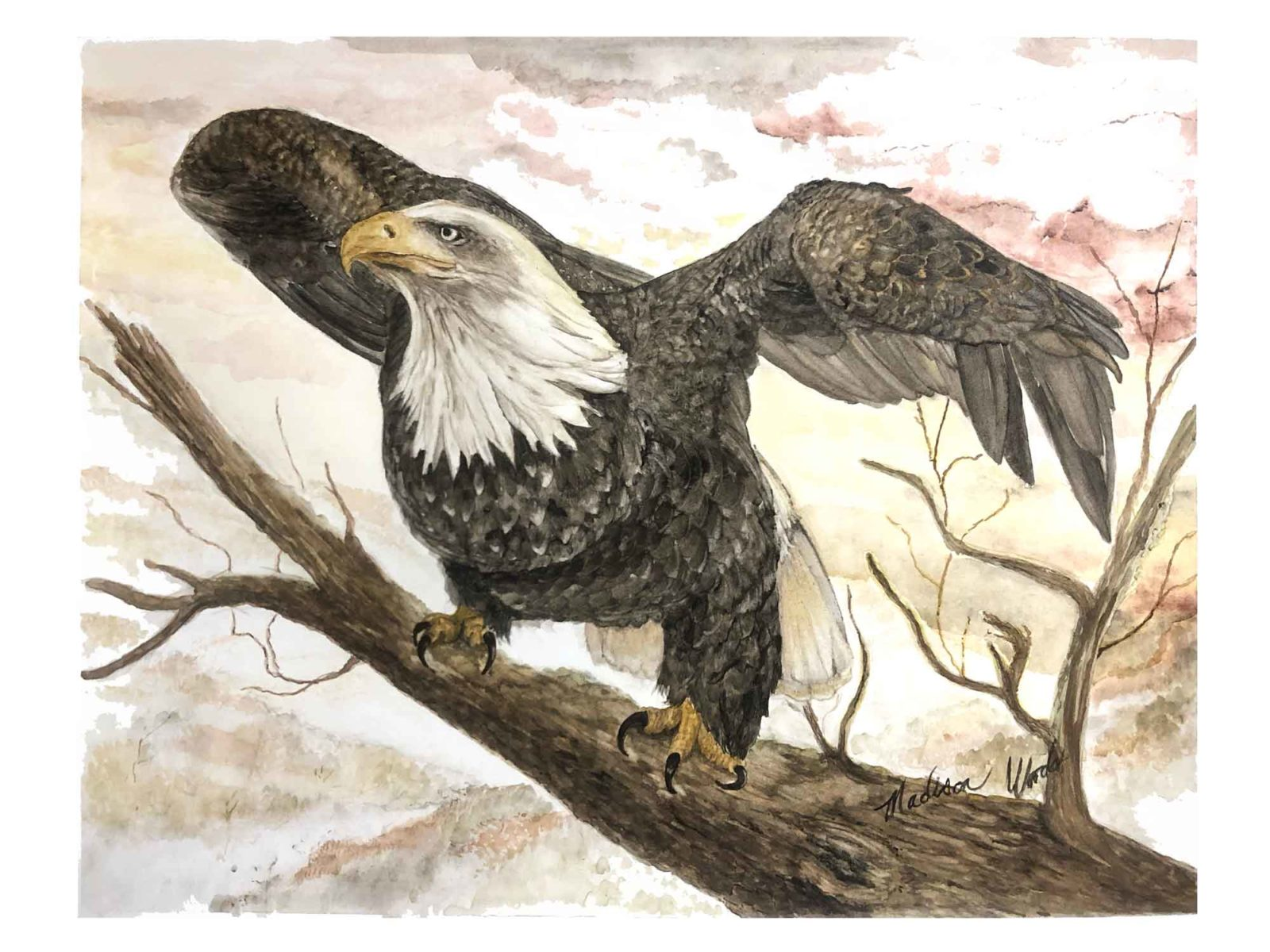 Original bald eagle painting by Madison Woods using Ozark pigments.
