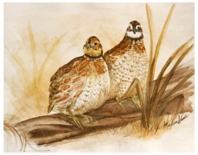 Original painting of northern Bobwhite quail in Ozark pigments.