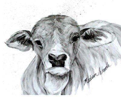 A grayscale art print of an adorable Brahman calf.