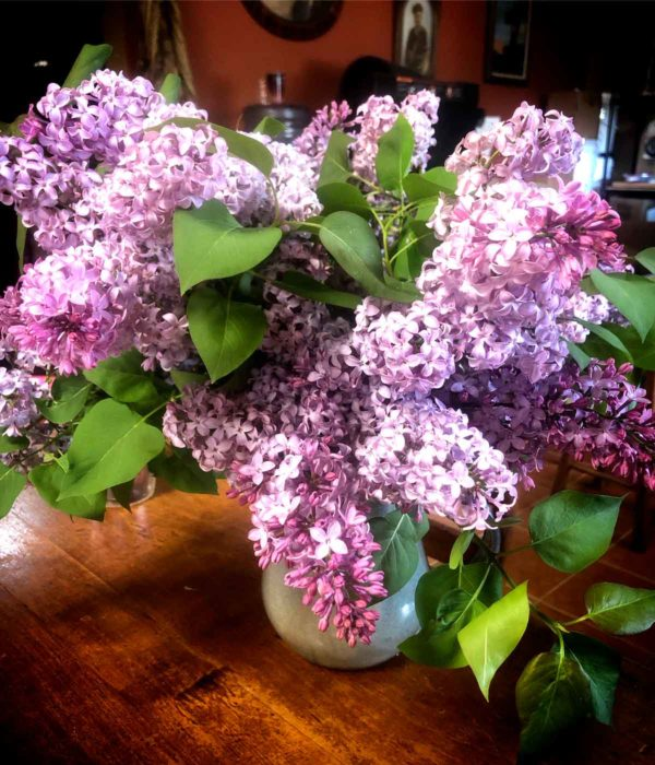Not a native, but still one of my favorite flowers. A vase of these fragrant beauties makes being a hermit much nicer!