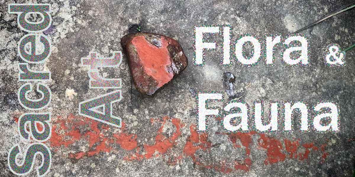 Flora and Fauna, and Sacred Art