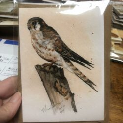 An art notecard by Madison Woods featuring Kestrel No. 3 in Ozark pigments.