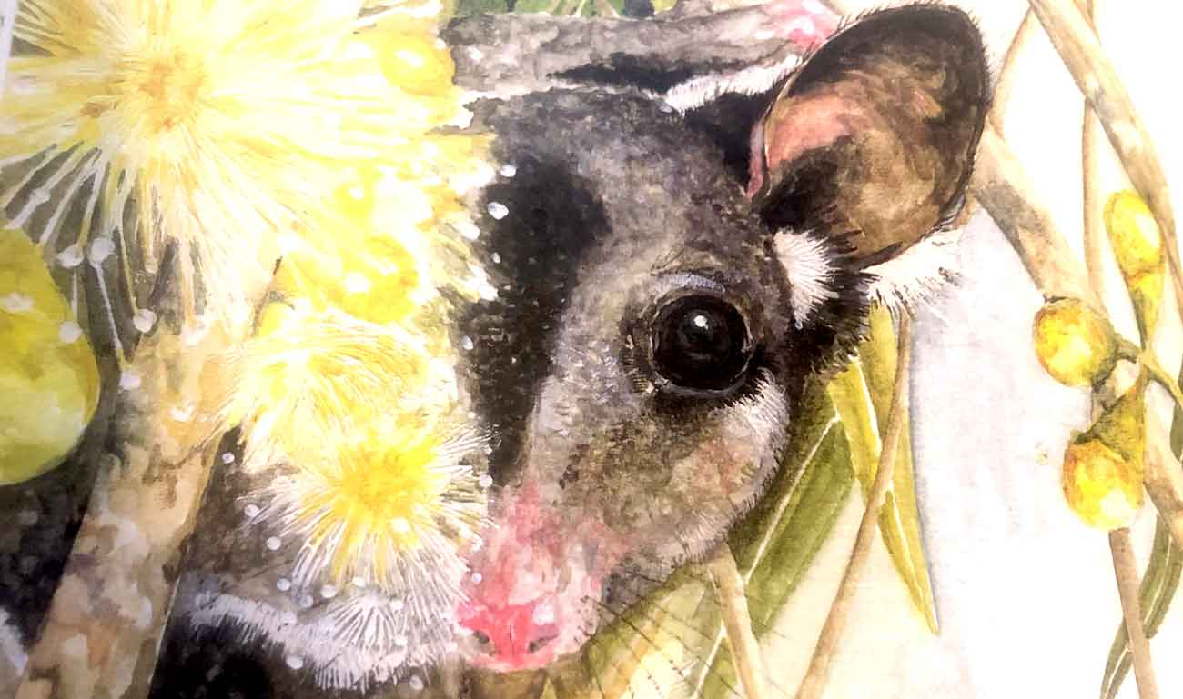 A sugar glider painted by Daryl Dickson, author of the book I just reviewed.
