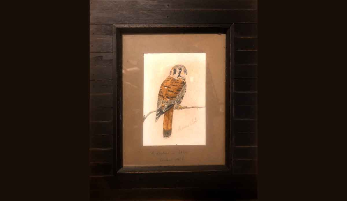 My second painting was a kestrel.