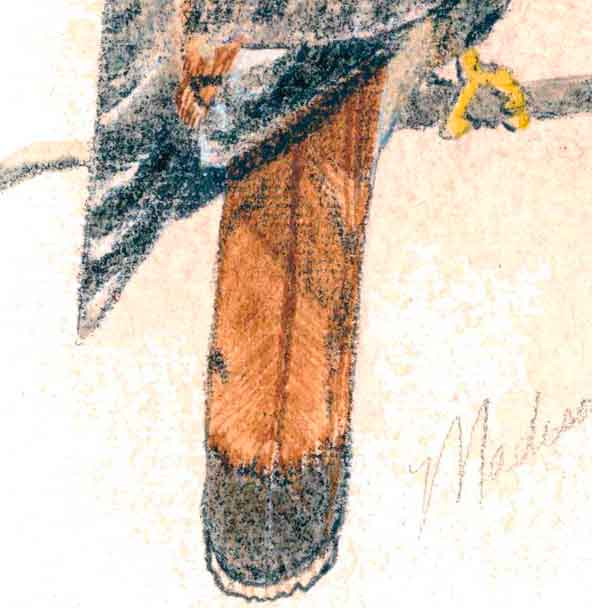 My second painting of a kestrel - closeup showing the 'sketching-like' technique I used when I first started painting.
