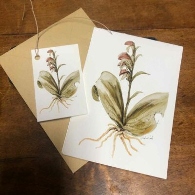 Notecards and gift tags featuring artwork by Madison Woods. Coordinate with wrapping papers and archival prints for a stylish gift package!