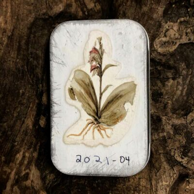 A decorative tin of watercolor Paleo Paints from Wild Ozark.